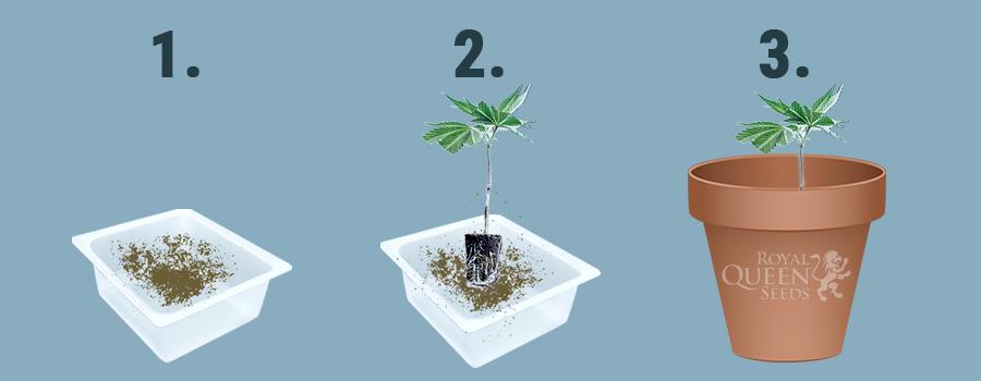 Rapide Poudre d/'Enracinement hormone de croissance racines des semis germination Coupe Clone