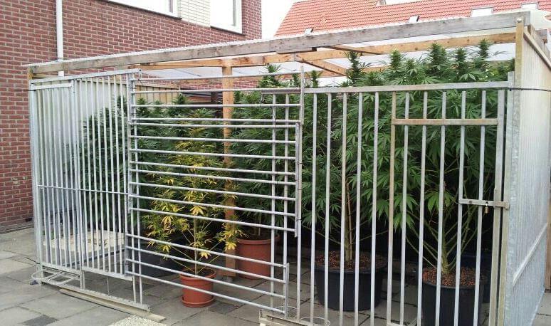 Cultiver le cannabis l ext rieur rqs blog for Autofloraison exterieur