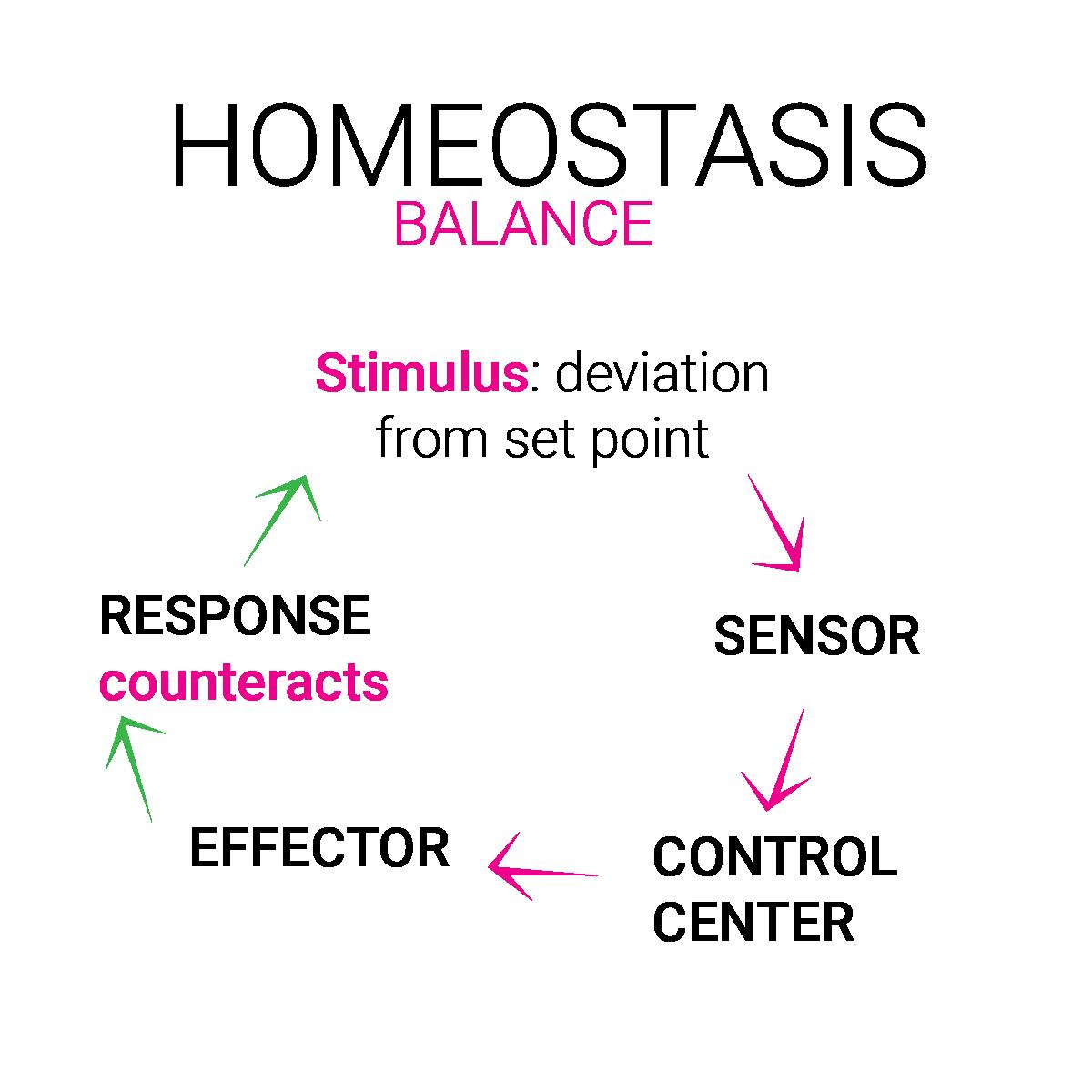 homeostasis equilibre