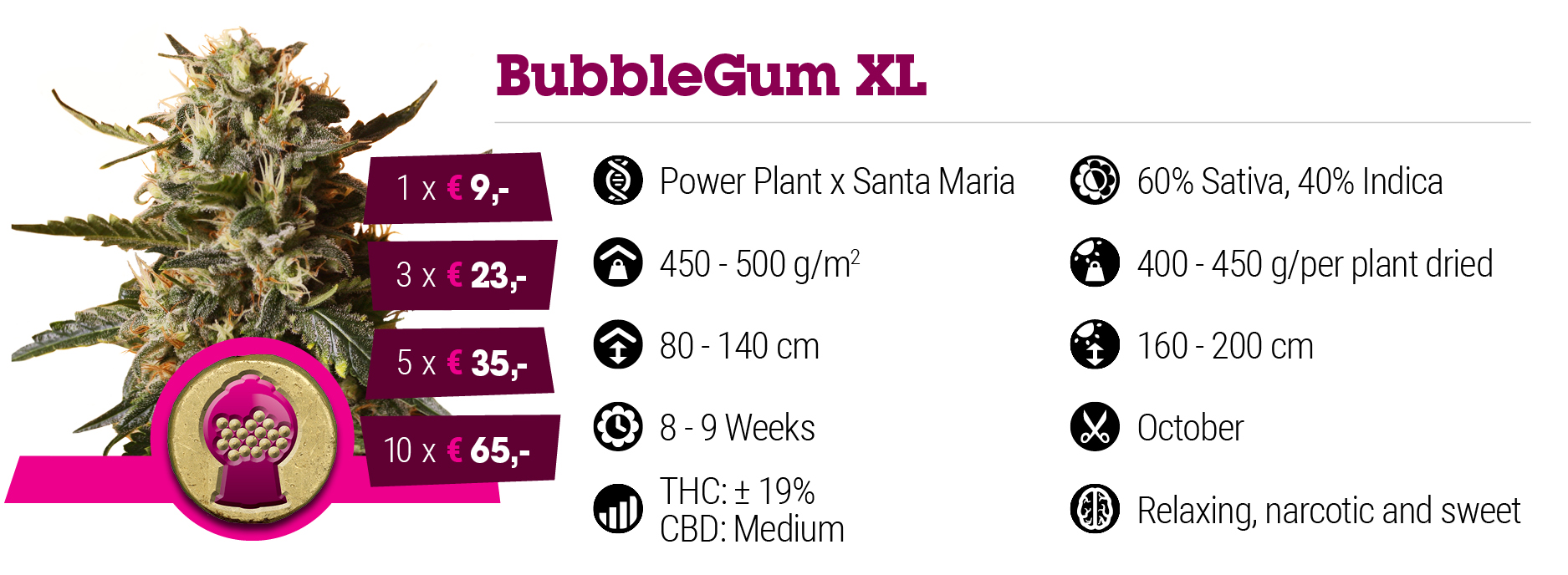 Bubble Gum XL