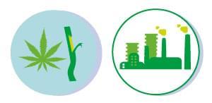 RENOUVELABLES cannabis