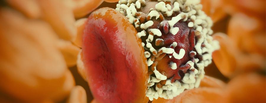 Les cellules se séparent du cancer du cannabis contre-effet