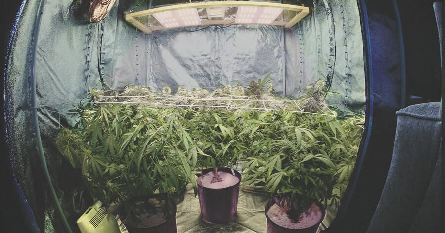 De Quoi J Ai Besoin Pour Cultiver Du Cannabis En Interieur Royal Queen Seeds