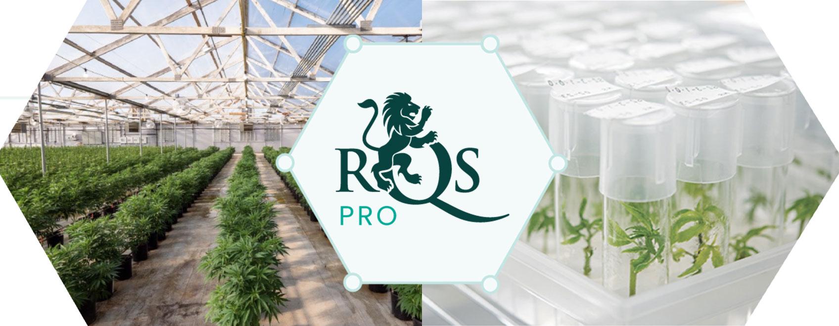 Leader de l'innovation et du développement dans le cannabis