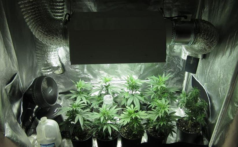 Cannabis Pousser La Tente