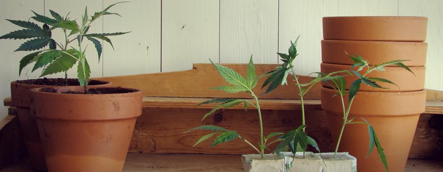 Uruguay legalisation cannabis