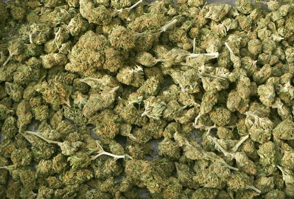 Comment faire le curing des têtes de Cannabis
