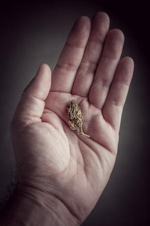 Le microdosage du cannabis consomme en toute sécurité des avantages
