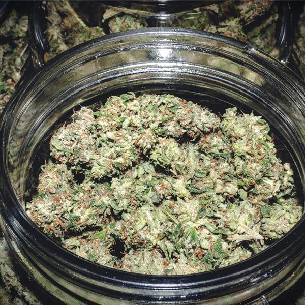 curing cannabis humidité récoltes