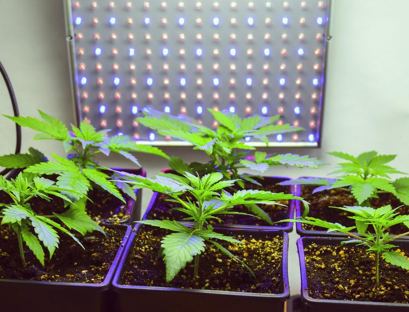 irlande légalise cannabis médical