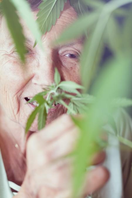 Strain Parkinson Cannabis royale Reine médicale douleur chronique Alzheimer Arthrite Dépression