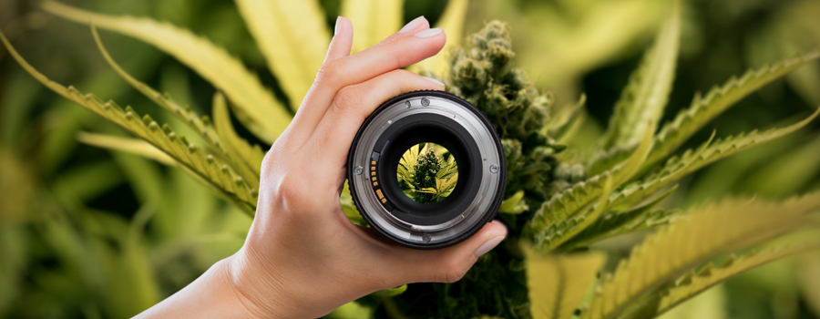 Camera Setup Lenses Cannabis Photographie
