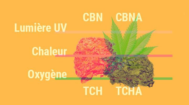 Pourquoi le cannabis perd sa puissance avec le temps ?