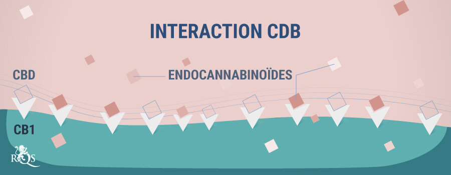 Interaction CBD