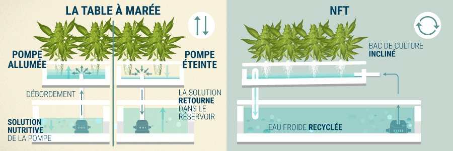 La Table À Marée (Ebb & Flow) vs Nutrient Film Tecnique