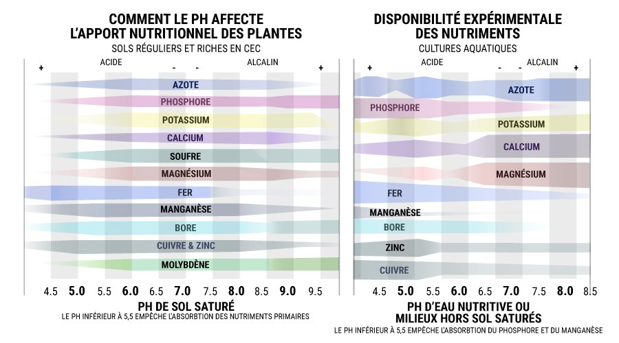 Comment Le Ph Affecte L'Apport Nutritionnel Des Plantes