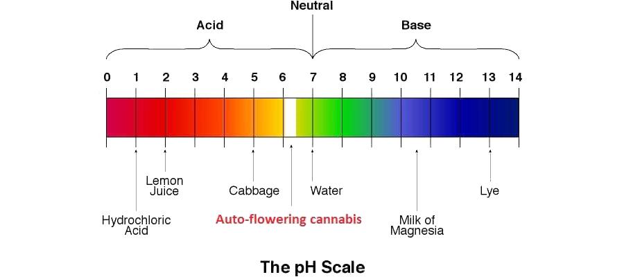 Le PH parfait pour un plant de cannabis