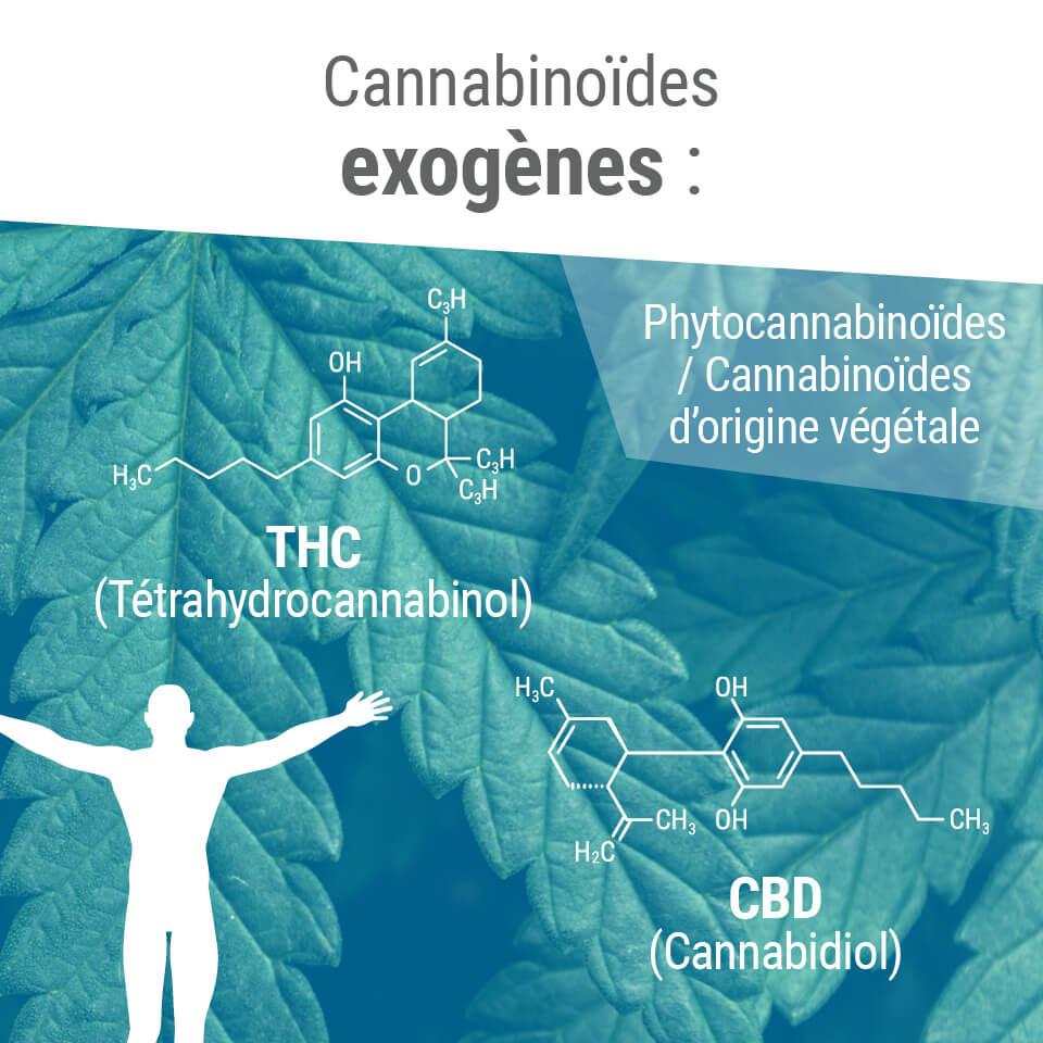 Cannabinoïdes exogènes