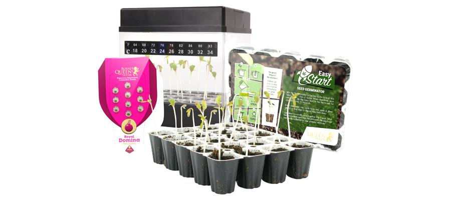 Starters Kit pour graines de cannabis