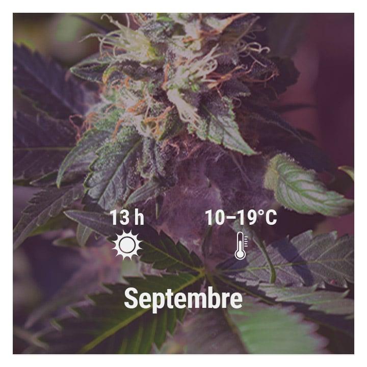 How To Grow Cannabis Outdoors - Belgium
