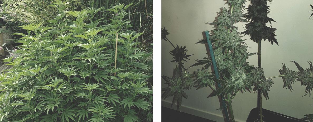 Soutenez Vos Plants Avec Des Tuteurs Et Des Attaches