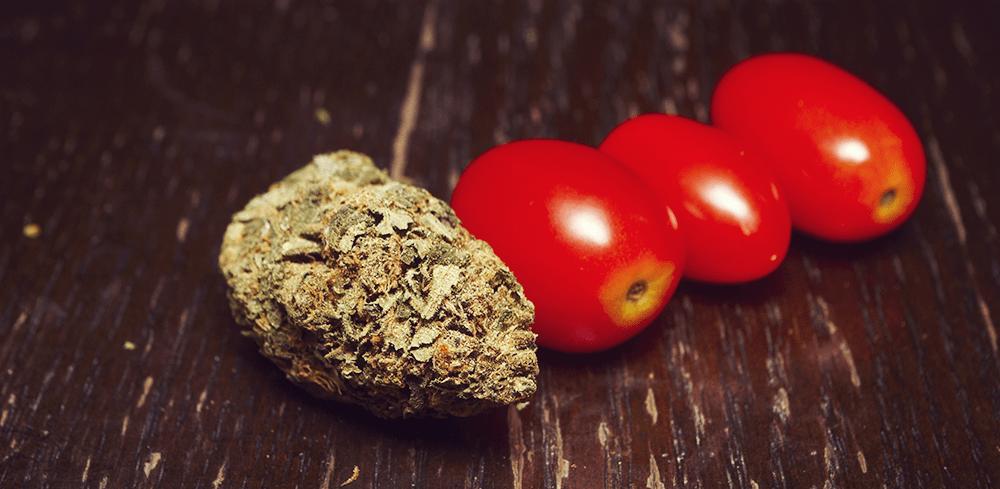 Bloody Mary boisson teinture de cannabis tomate savoureuse infusé de jus mauvaises herbes