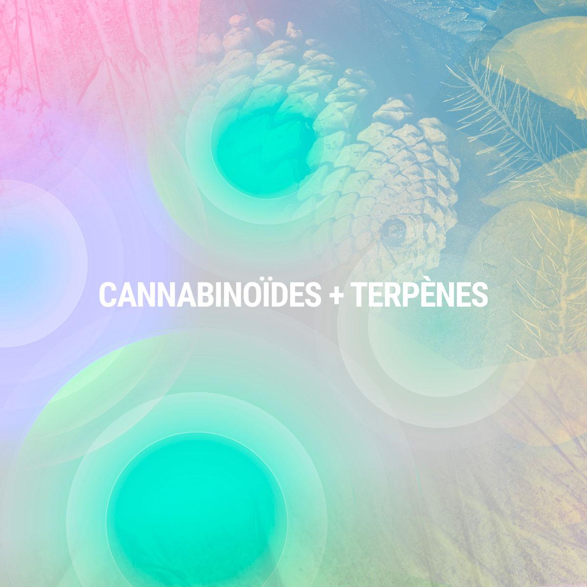 Cannabinoïdes + Terpènes