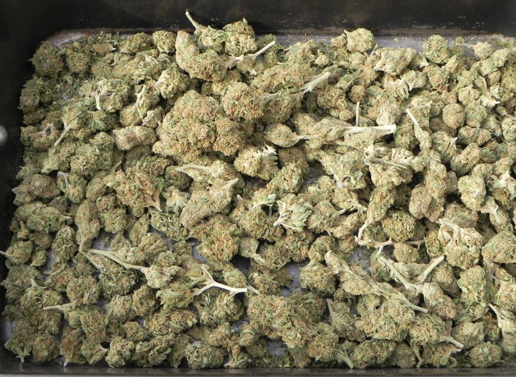 Comment cultivar le cannabis autofloraison royal queen for Weed plantation exterieur