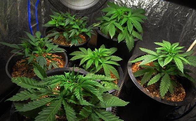 Construire votre propre salle de culture for Culture cannabis interieur hydroponique
