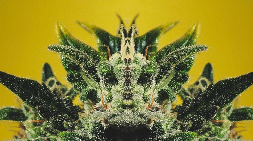 Que signifie la phrase « la plante montre la vérité »?