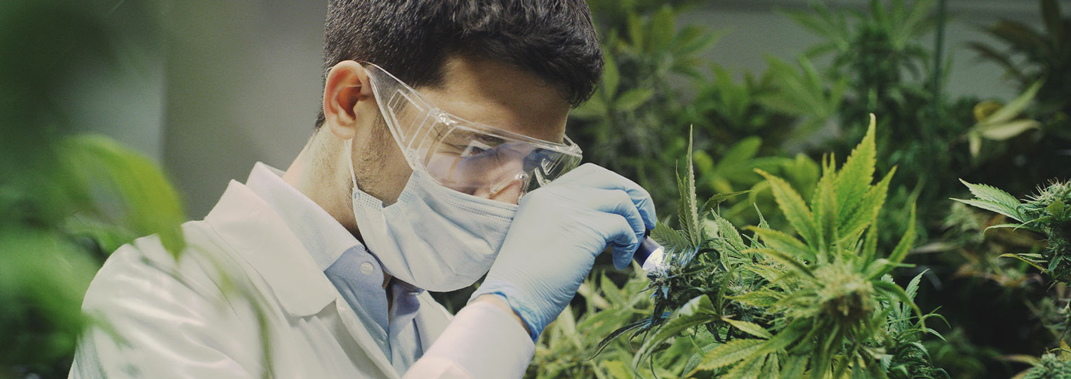 La recherche sur le cannabis n'a fait que gratter la surface