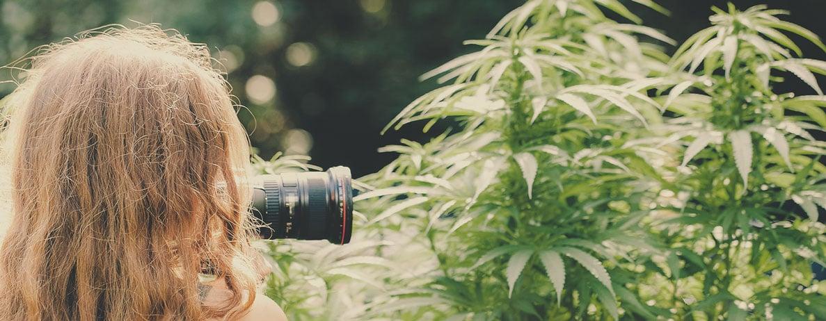 Quel type de travail peut-on attendre d'un photographe spécialiste du cannabis (par exemple, dans l'immobilier, pour des dispensaires, des photojournalistes spécialistes du cannabis…) ?