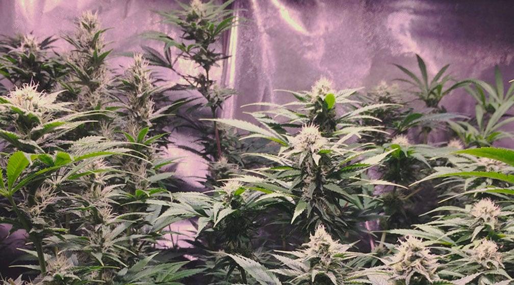 Hulkberry