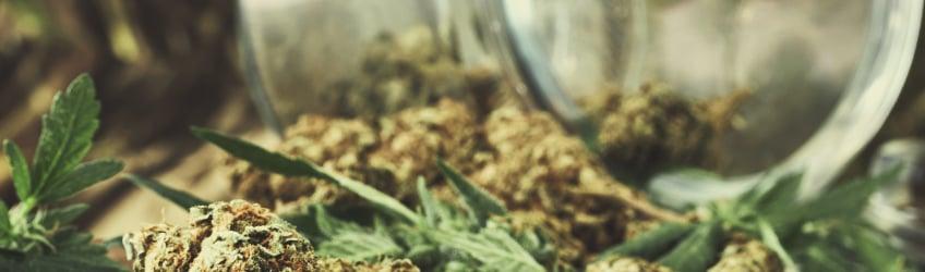 Il N'y a Pas De Symptômes De Sevrage Du Cannabis