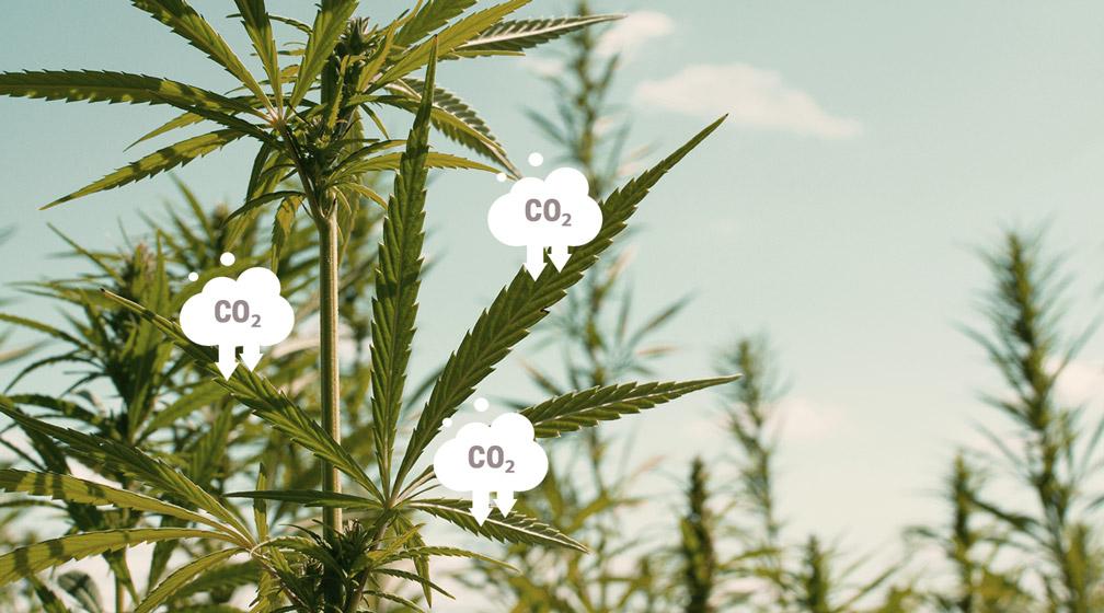 Carbon Farming