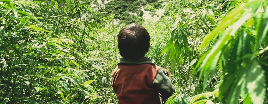 Le cannabis rend-il un parent apathique et peu énergique, ce qui nuit à la concentration nécessaire pour s'occuper des enfants ?