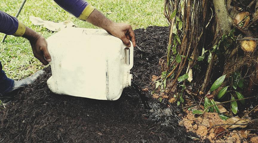 Application du thé de compost