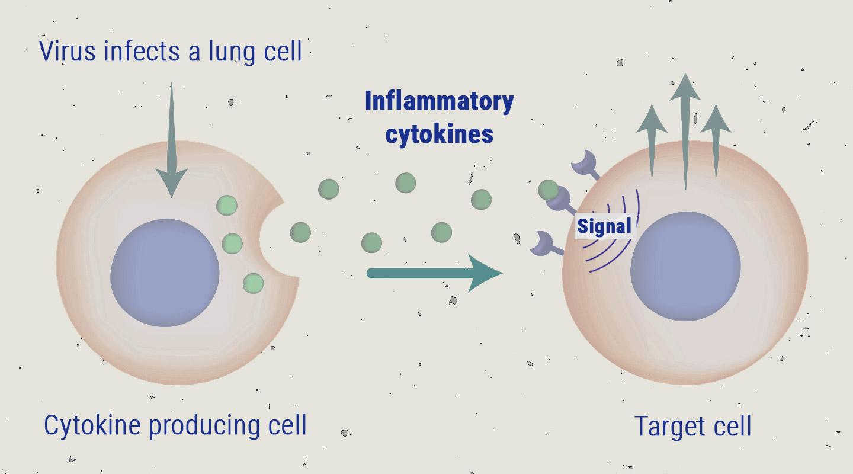 La tempête de cytokines