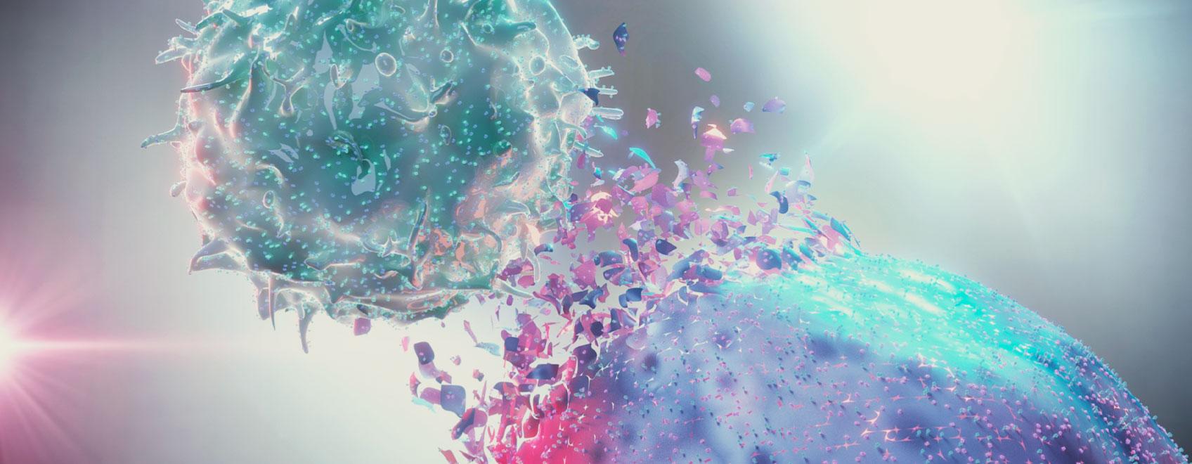 Le rôle du système endocannabinoïde dans l'immunité