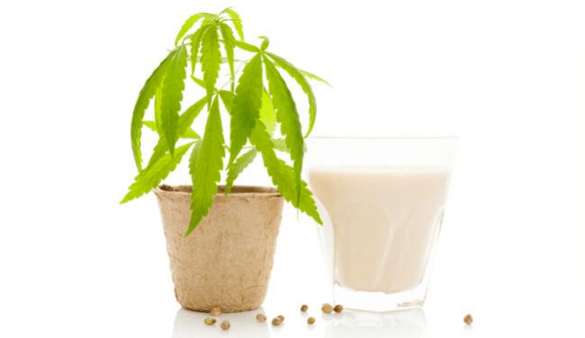 cannabis lait de coco de la marijuana à l'huile de la crème glacée à la menthe d'avocat