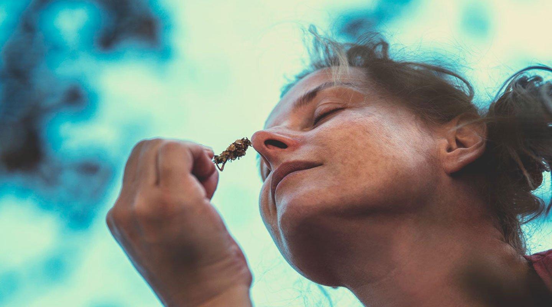 Le cannabis peut-il aider les gens à supporter l'anxiété, le stress, la perte de poids, à laisser l'alcool de côté?