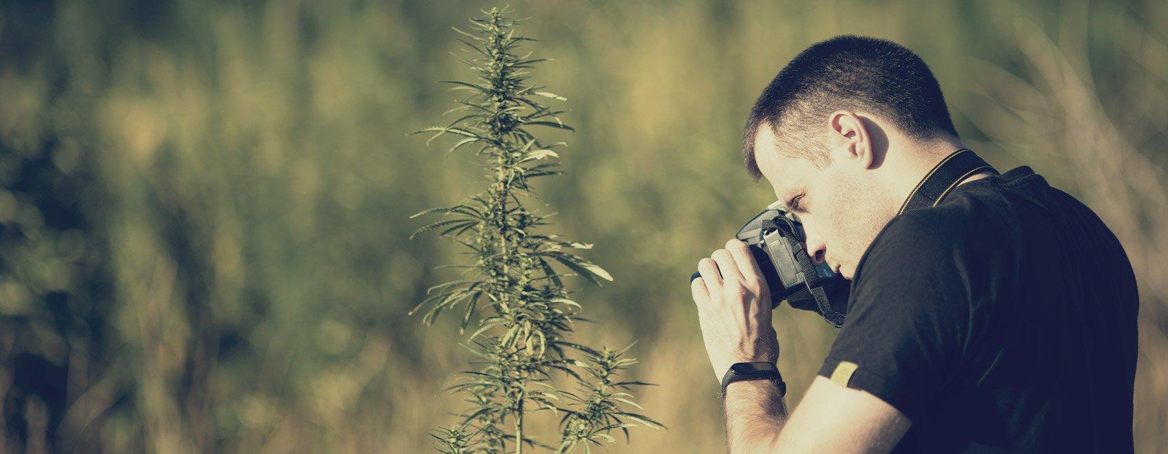 Pouvez-vous partager avec nous vos meilleurs conseils pour prendre des photos de cannabis créatives ?