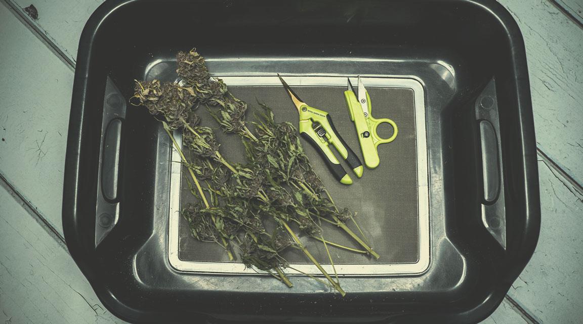 Préparer votre récolte