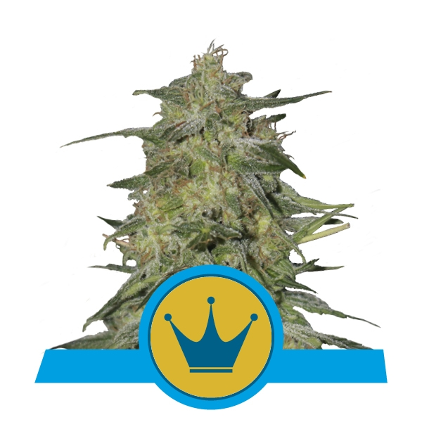Buy Royal Highness