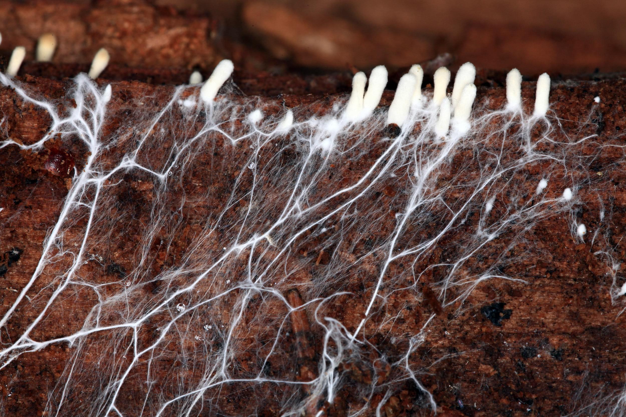 nutriments racines de plantes de cannabis alimentent le drainage de l'oxygène