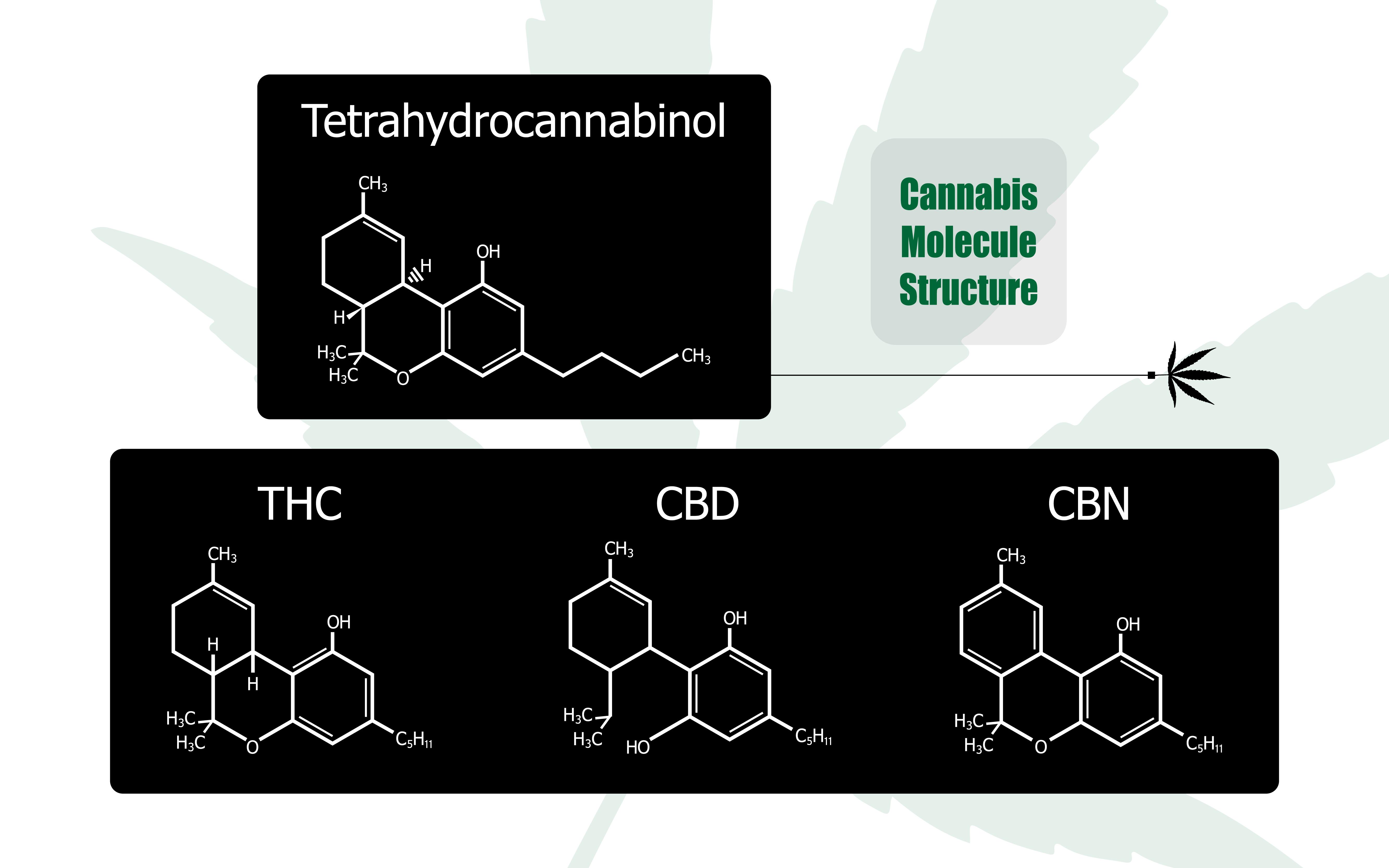 CBD THC effet entourage contrebande symbiose système immunitaire psyché cannabis marijuana médicale cannabinoïde endocannabinoïde moduler