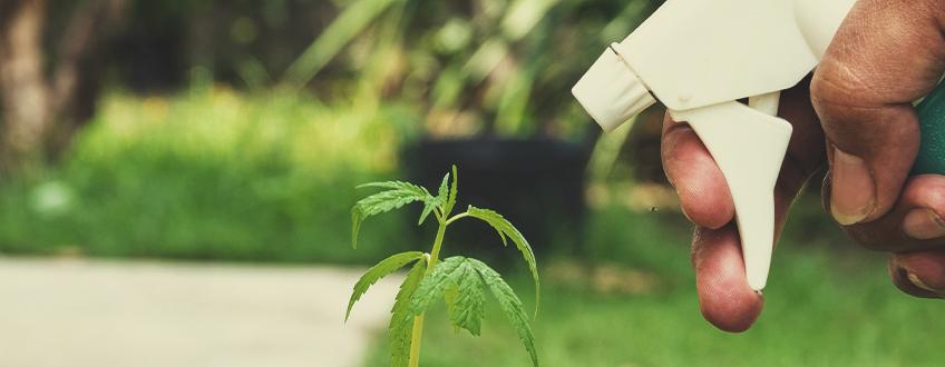 Défend les Plants Contre les Maladies
