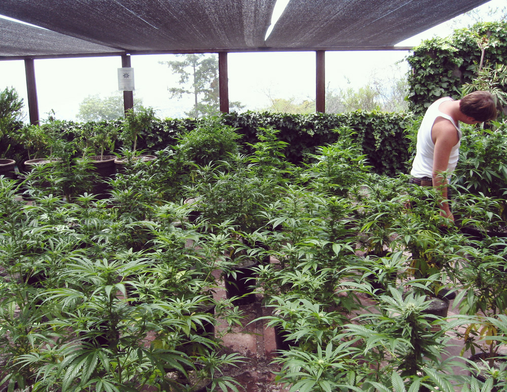 Espagne légalization catalonia droit loisir thérapeutique thérapeutique marijuana