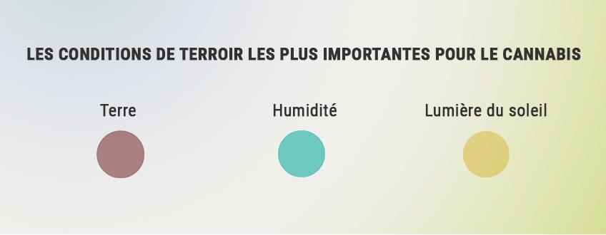 COMMENT MAXIMISER LE TERROIR POUR CULTIVER DU MEILLEUR CANNABIS
