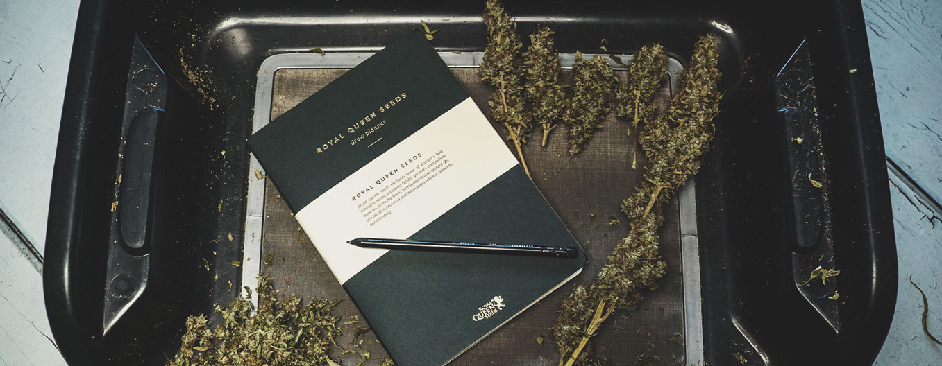 Que faut-il noter dans un journal de consommation de cannabis ?